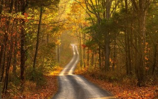 Random: Autumn Forest Leaves & Road