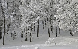 Previous: Snow White Trees Winter