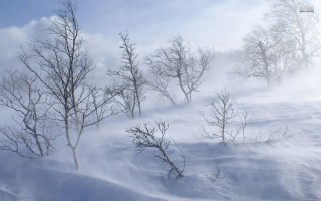 Snow Storm Trees & Snow wallpapers and stock photos
