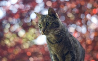 Cat and Pretty Bokeh wallpapers and stock photos