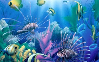 Fishes & Corals Underwater wallpapers and stock photos