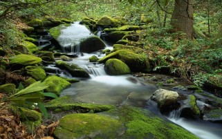 Stones Moss Waterfall Forest wallpapers and stock photos