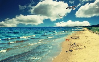 Perfect Ocean Beach & Birds wallpapers and stock photos