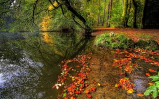 Pretty Autumn Forest Riverside wallpapers and stock photos