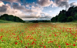 Random: Poppy Meadow Trees & Clouds