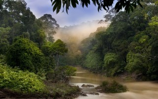 Jungle River & Foggy wallpapers and stock photos