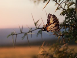 Butterfly Close Up wallpapers and stock photos