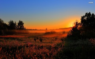 Secret Sunrise Fog Trees Field wallpapers and stock photos
