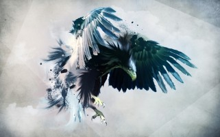 Northen Eagle wallpapers and stock photos