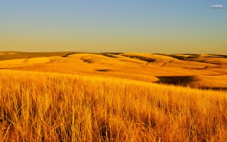 Dry Grass Fields wallpapers and stock photos
