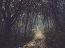 Mysterious Forest & Small Sendero wallpapers and stock photos