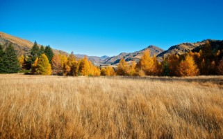 Autumn Trees Field & Canyon wallpapers and stock photos