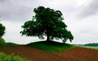 Tree & Field Dirt Earth wallpapers and stock photos