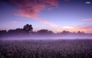 Random: Purple Foggy Field