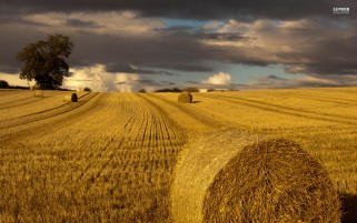 Hay Bales & Field Close Up wallpapers and stock photos