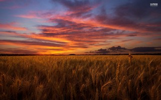 Previous: Corn Field Under Orange Sky