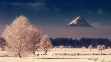 Frosty Desert Trees Mountain wallpapers and stock photos