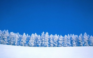 Winter Clearing wallpapers and stock photos