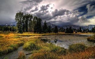Clouds Trees Swamp Grass wallpapers and stock photos