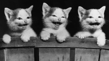 Monochrome Kittens wallpapers and stock photos