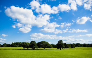 Trees On Green Field wallpapers and stock photos
