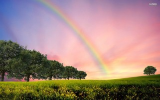 Rainbow Trees & Flowerfield wallpapers and stock photos