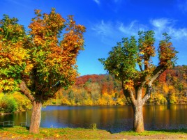 Next: Colorful Autumn Trees & River