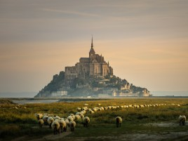 Castle Grass Sheeps France wallpapers and stock photos