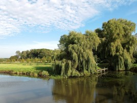 Willow Shore Lake Field wallpapers and stock photos