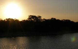 Previous: Riverside Sun Nature