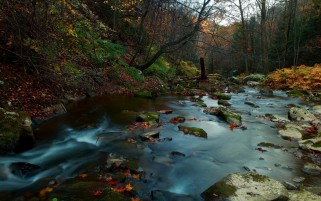 Autumn Forest Creek & Stones wallpapers and stock photos