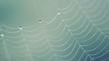 Water Droplets on Spider's Web wallpapers and stock photos