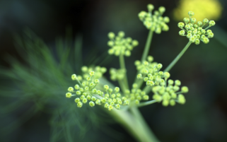 Green Flowers Macro wallpapers and stock photos
