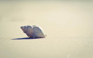 Lonely Seashell wallpapers and stock photos