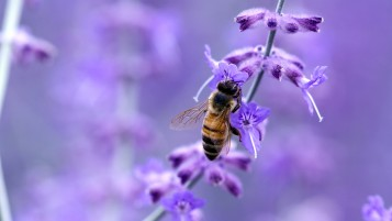 Bee Close-up wallpapers and stock photos