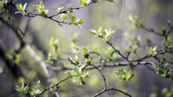 Spring Branches wallpapers and stock photos