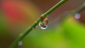 Water Droplet on Branch wallpapers and stock photos