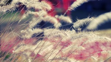 Beautiful Plants Macro wallpapers and stock photos