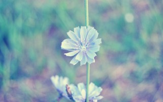 Light Blue Flower wallpapers and stock photos