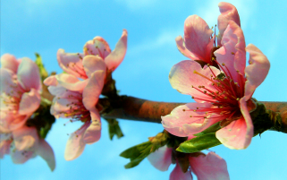 Spring Blossom wallpapers and stock photos