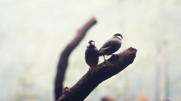 Birds on Branch wallpapers and stock photos
