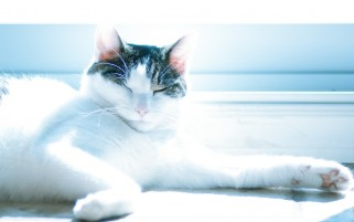 Cute Cat in the Sun wallpapers and stock photos