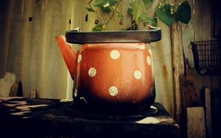 Polka Dot Pot wallpapers and stock photos