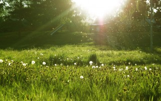 Sunny Summer Morning wallpapers and stock photos