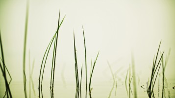 Grass in Water wallpapers and stock photos