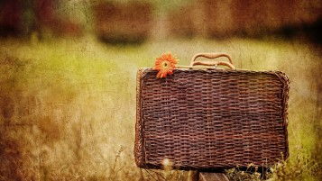 Orange Flower and Basket wallpapers and stock photos