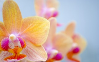Orchids Macro wallpapers and stock photos