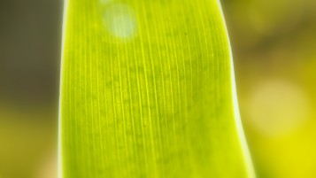 Bright Green Leaf Close-up wallpapers and stock photos