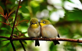 Cute birds wallpapers and stock photos