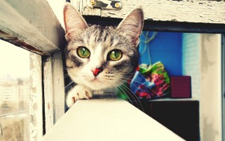Cute cat wallpapers and stock photos